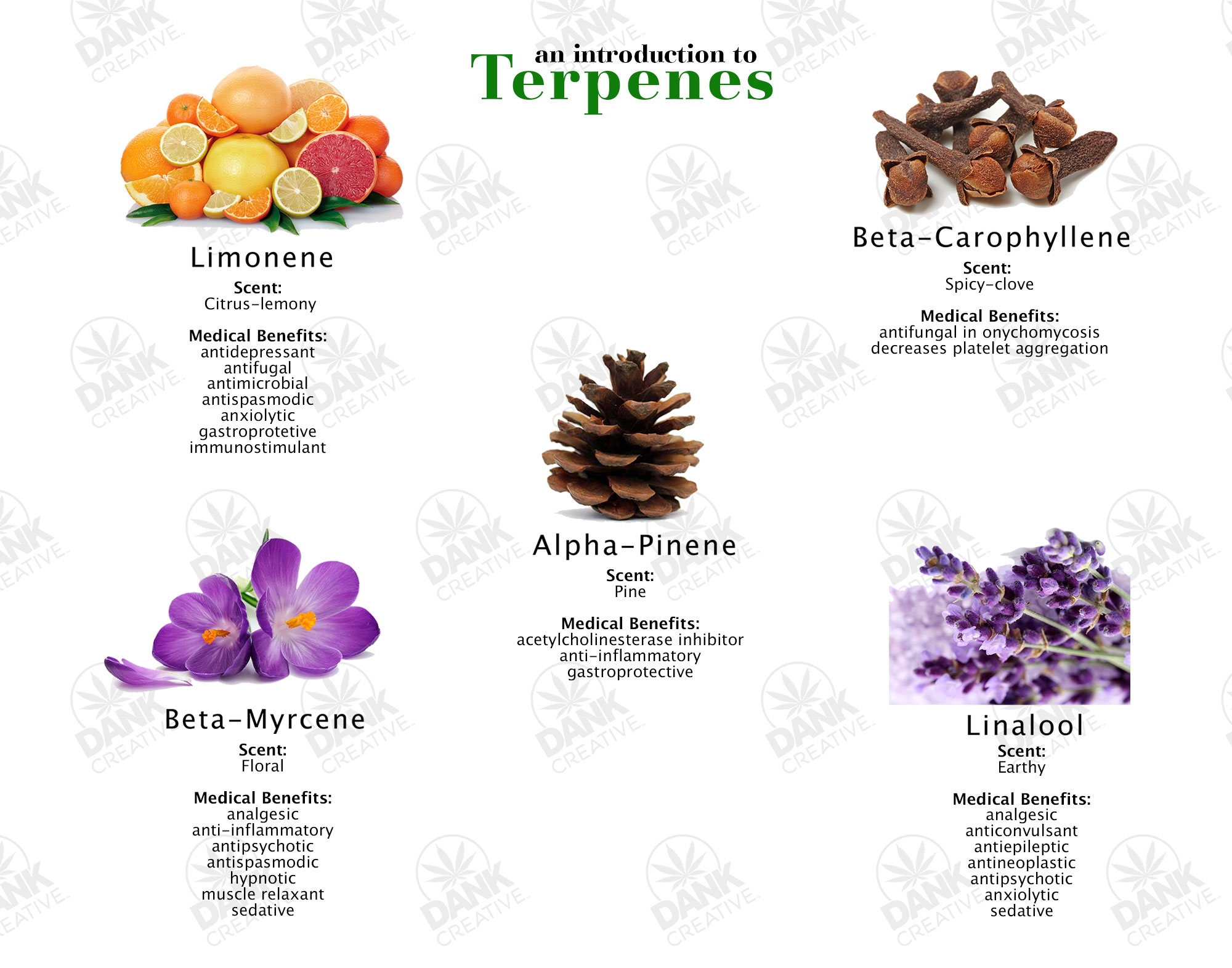 An Introduction to Cannabis Terpenes